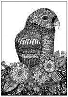 Coloring page adults parrot zentangle sabrina