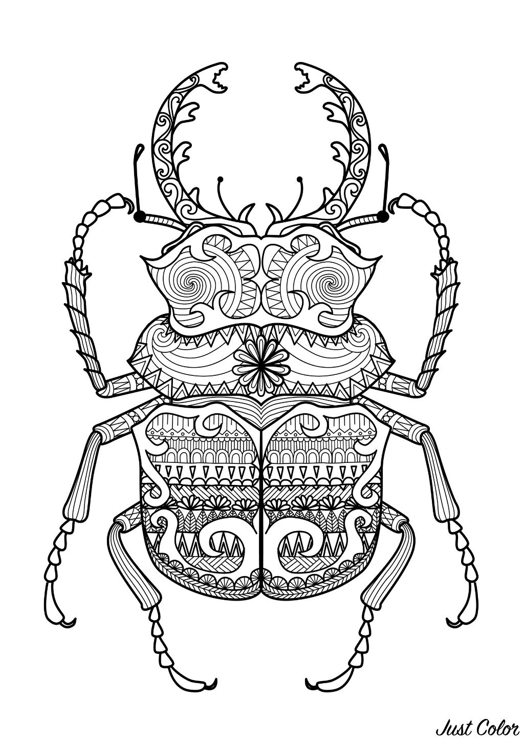 Incredible Beetle with extraordinary patterns