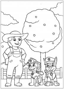 Pat Patrouille Stella Coloriages Pour Enfants