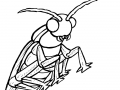 coloring-page-insects-to-download-for-free