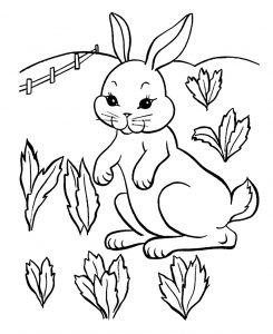 coloring-page-rabbit-to-download-for-free