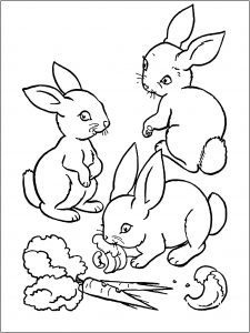 coloring-page-rabbit-to-print-for-free