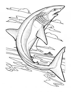 coloring-page-sharks-to-print-for-free