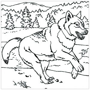 coloring-page-wolf-to-print