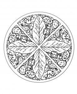 Mandala Animaux 100 Mandalas Zen Anti Stress