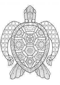 Coloriage Mandala De Tortue.Tortue Des Mers Tortues Coloriages Difficiles Pour Adultes